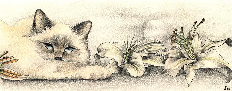 Birman Drawing - Lily the Birman by Johanna Pieterman