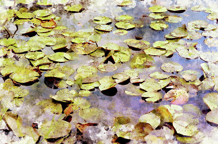 Lily Pad Digital Art - Lilypads W C by Peter J Sucy