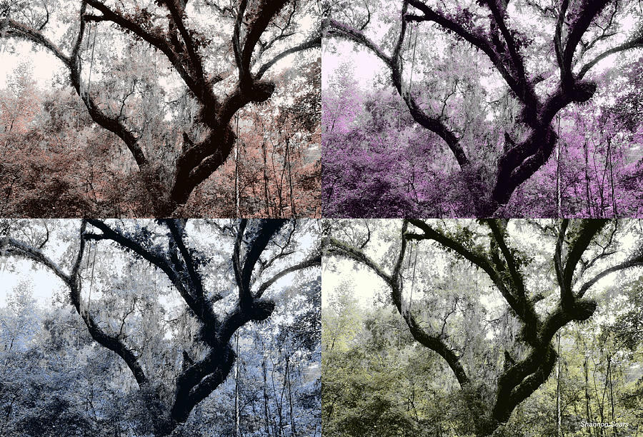 Shannon Digital Art - Limbs Of Splendid Hues by Shannon Sears