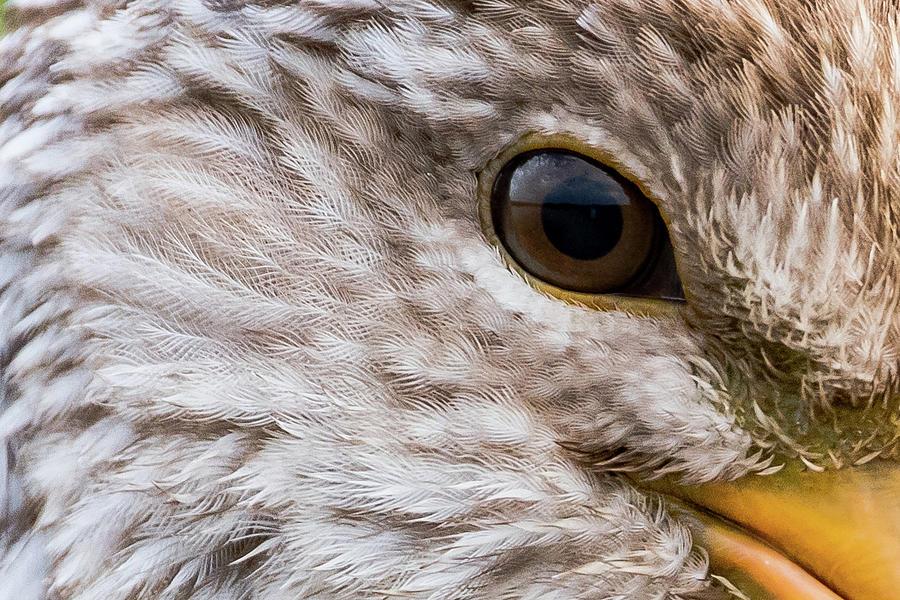 Birdwatching Photograph - Limpkin Look by Don Miller
