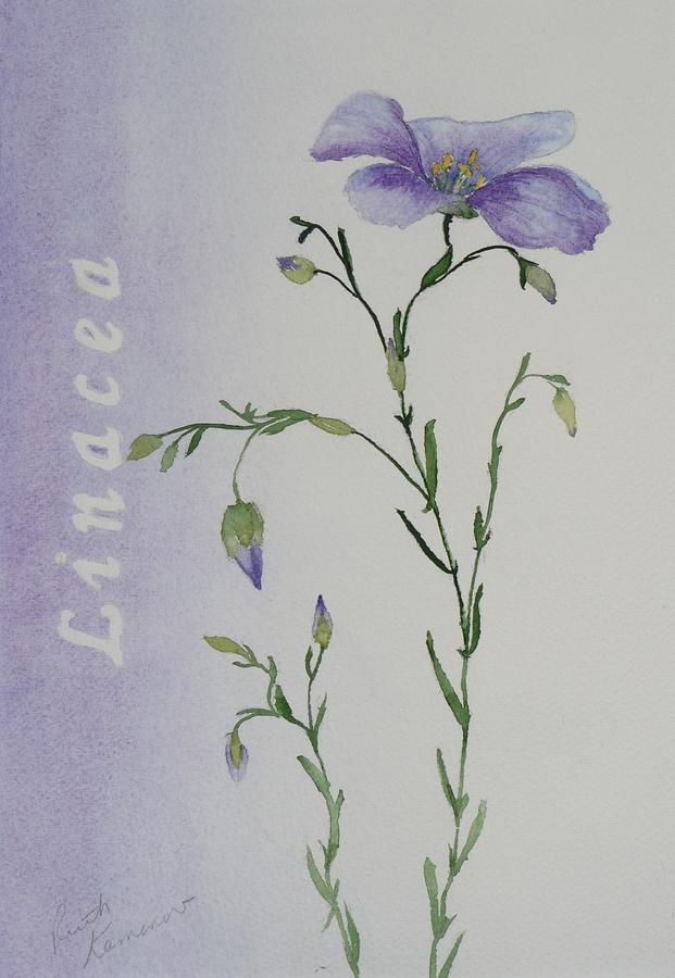 Flower Painting - Linacea by Ruth Kamenev