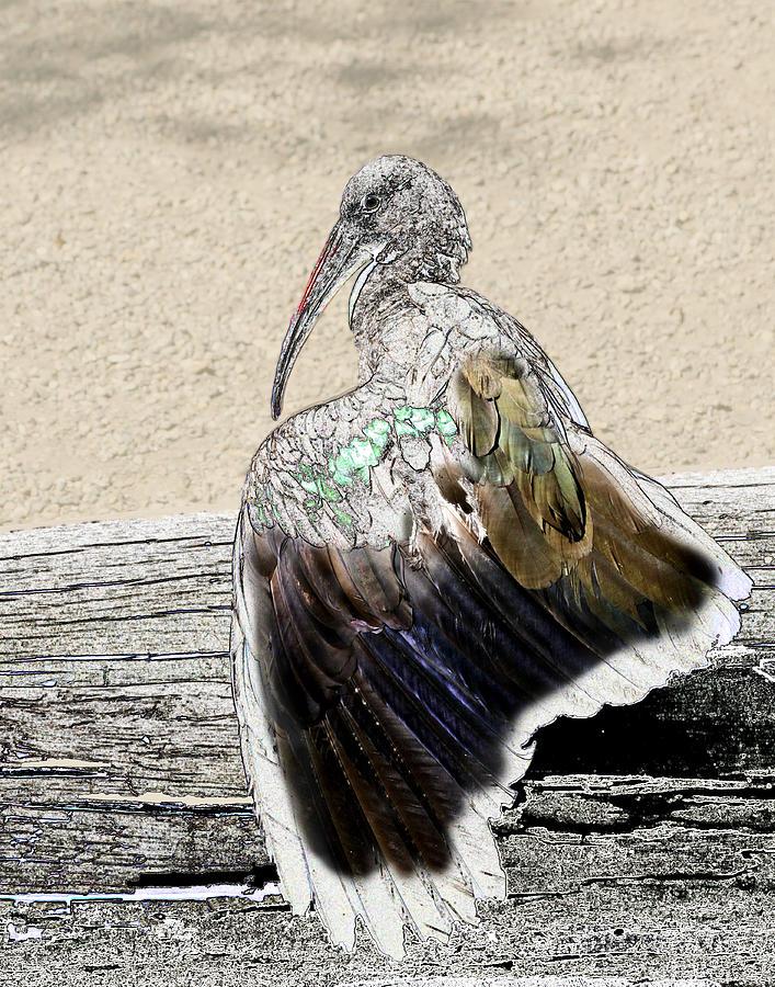 Line Ibis Photograph by Torrey E Smith