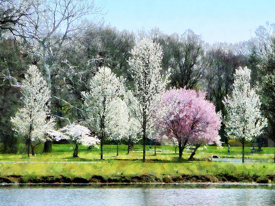 Spring Photograph - Line Of Flowering Trees by Susan Savad