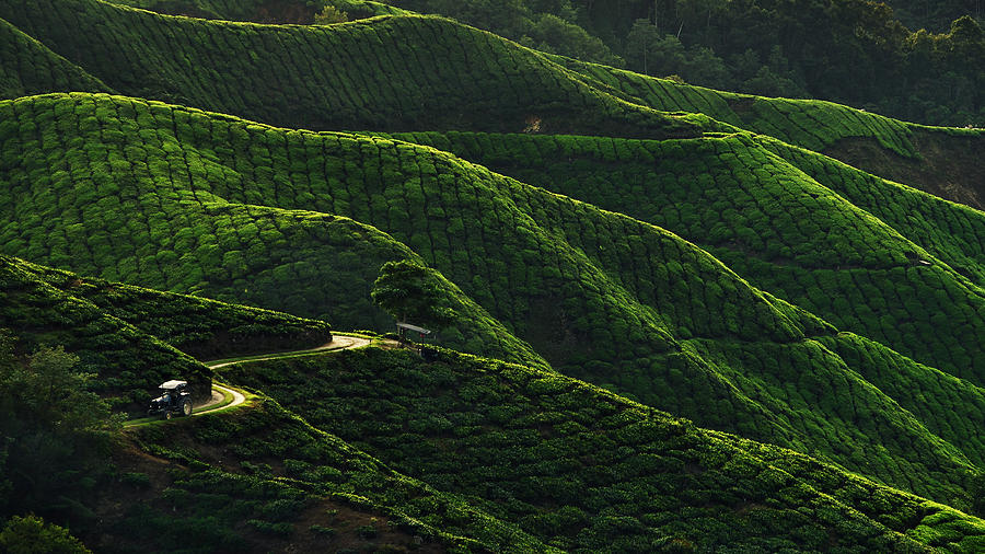 Landscape Photograph - Lines by Jordan Lye