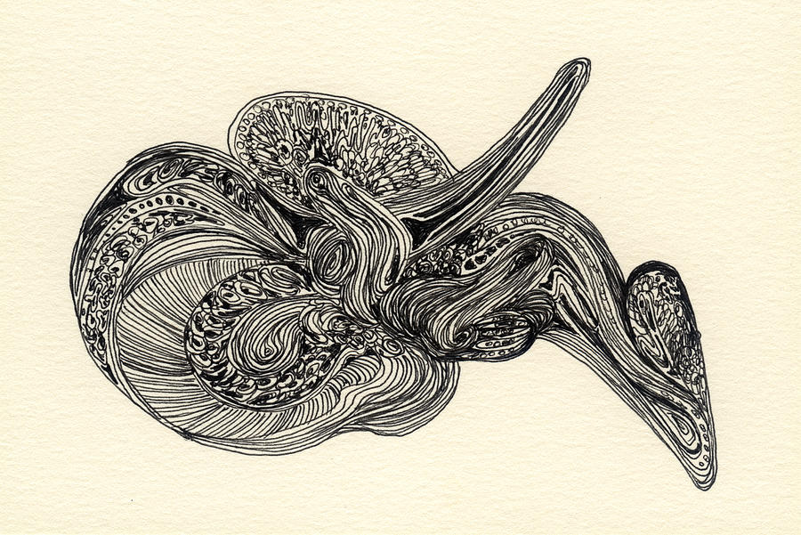 Organic Drawing - Lines - #ss13dw025 by Satomi Sugimoto