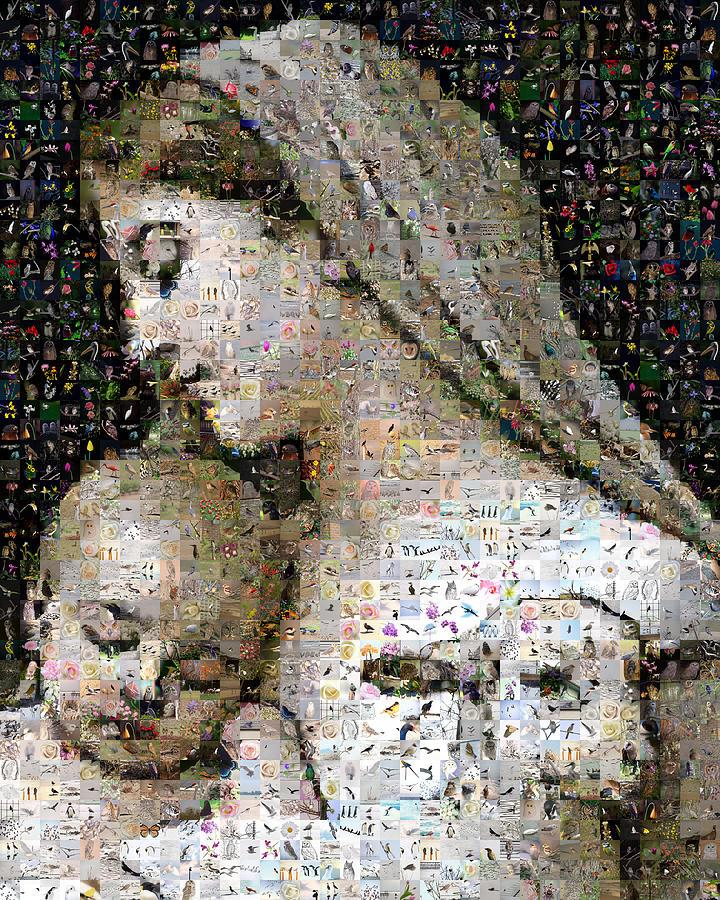 Mosaic Digital Art - Linnocence by Gilberto Viciedo
