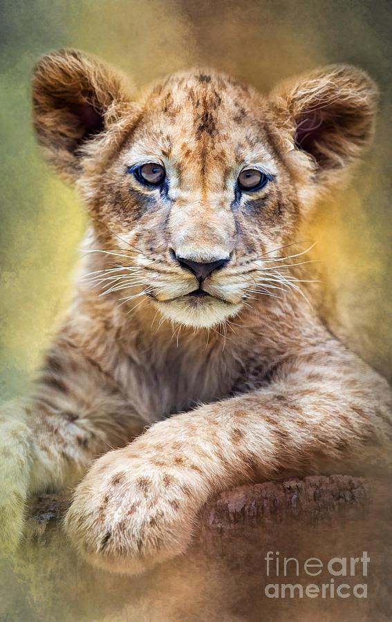 Lion Cub by Marco Fischer