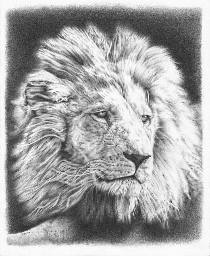 Lion Drawing - Fluffy Lion by Remrov
