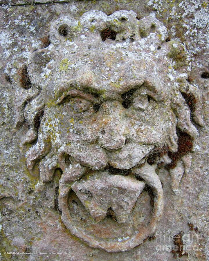 Face Photograph - Lion Face by Katrina Perekrestenko