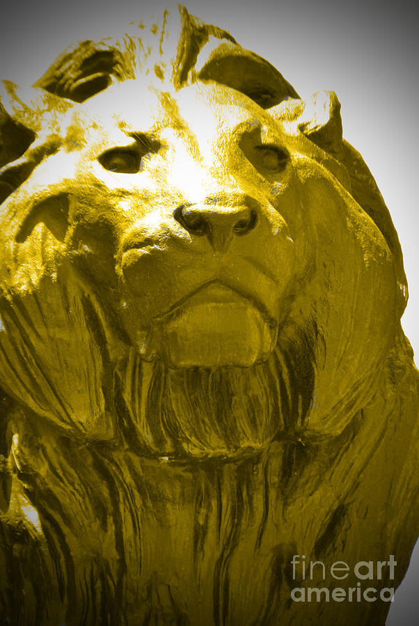 Baltimore Photograph - Lion Gold by Jost Houk