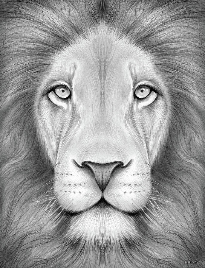 Lion head drawing lion head by greg joens