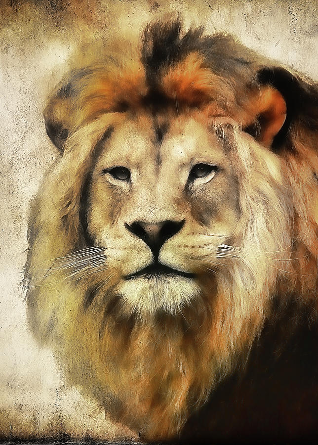 Lion Photograph - Lion Majesty by Athena Mckinzie