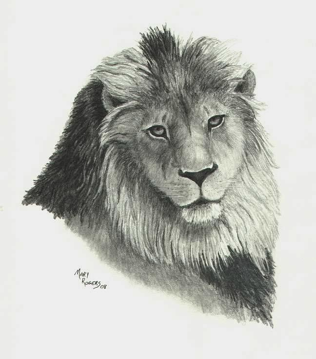 Lion Drawing - Lion by Mary Rogers