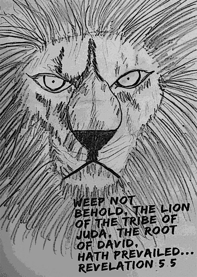 Lion Drawing - Lion Of Judah by SGLY Ministry
