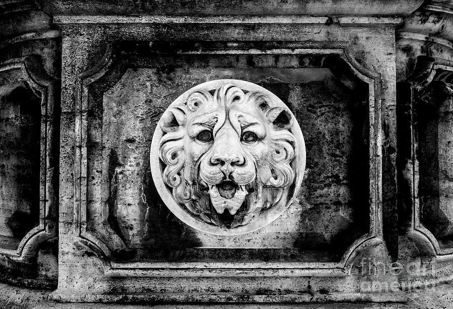 Rome Photograph - Lion Of Rome by Jason Knott