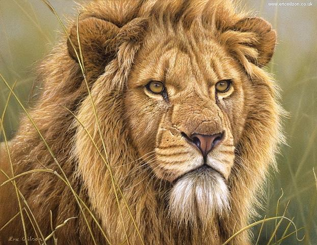 Lion Painting - Lion Portrait In Pastel by Eric Wilson