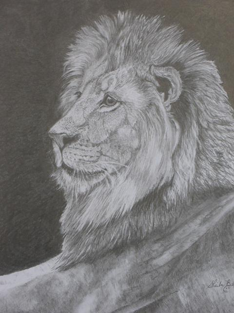 Lion Drawing - Lion Portrait by Sheila Banga