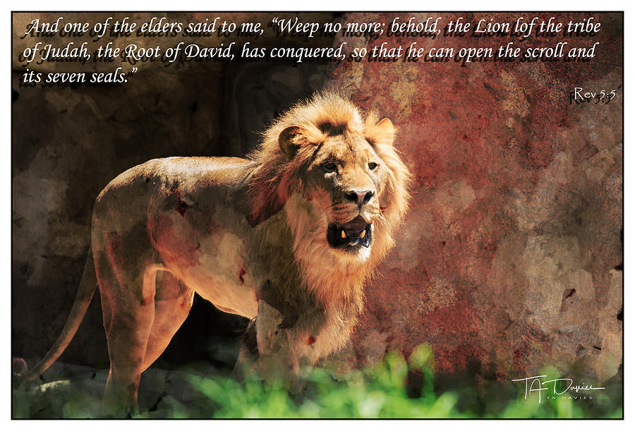 Lion Revelation 5 by T A Davies