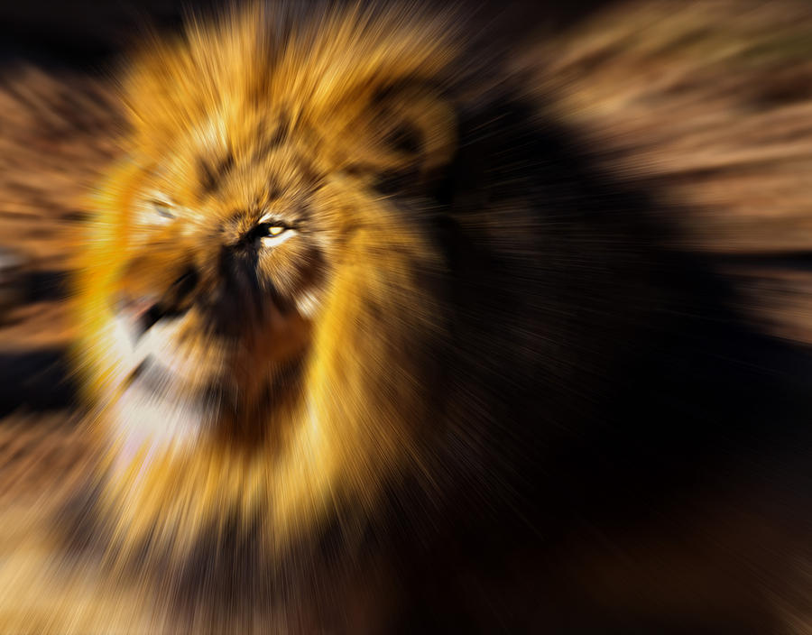 Lion The King Is Comming Digital Art