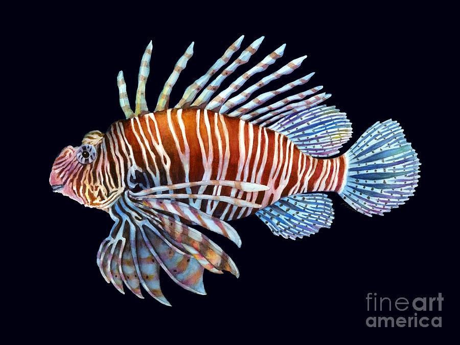 Lionfish Painting - Lionfish on Black by Hailey E Herrera
