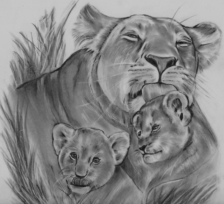 Lioness And Cubs Drawing