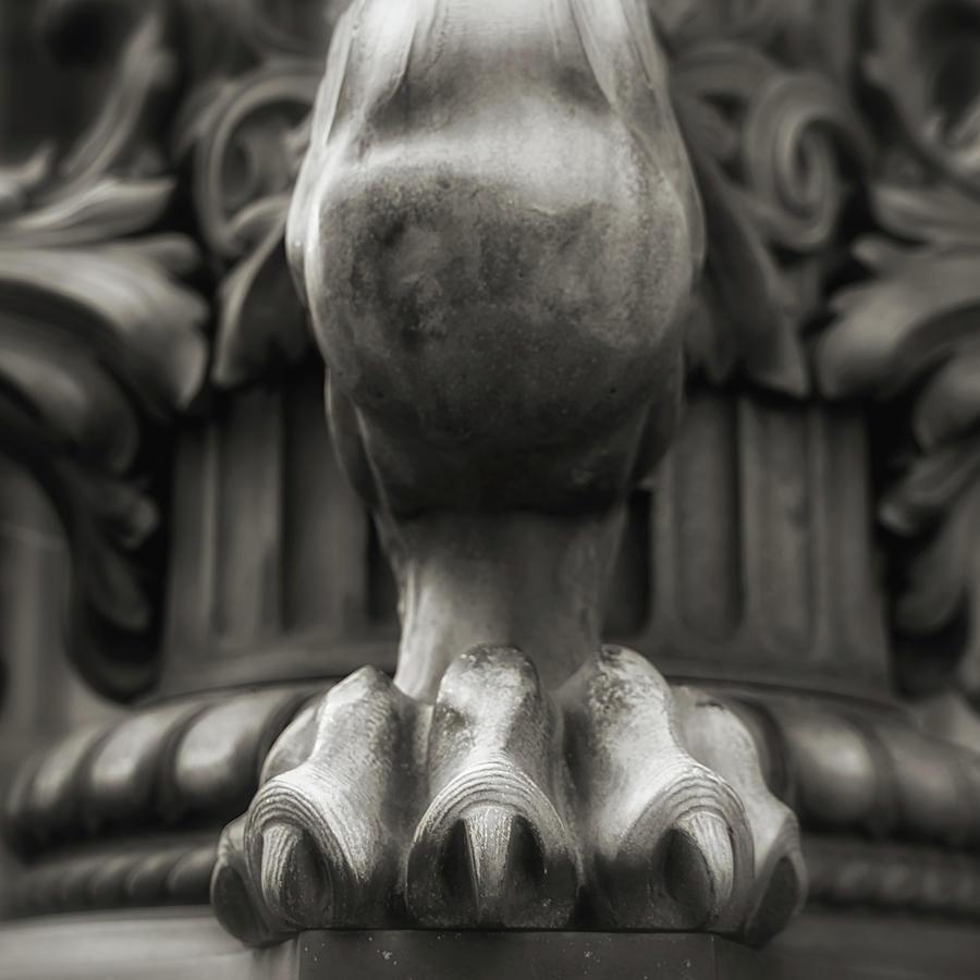 Lions Claw Photograph by Anna Jo Noviello