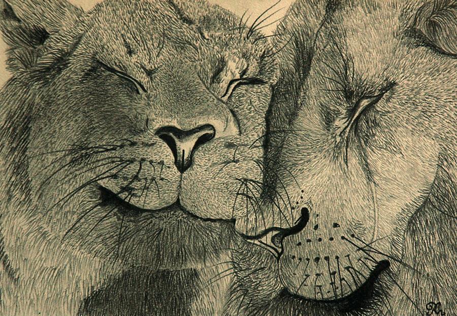 Lions In Love Drawing by Ramneek Narang