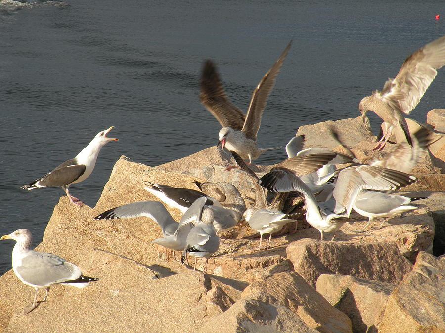 Birds Photograph - Listen Up Gulls by Donald Cameron