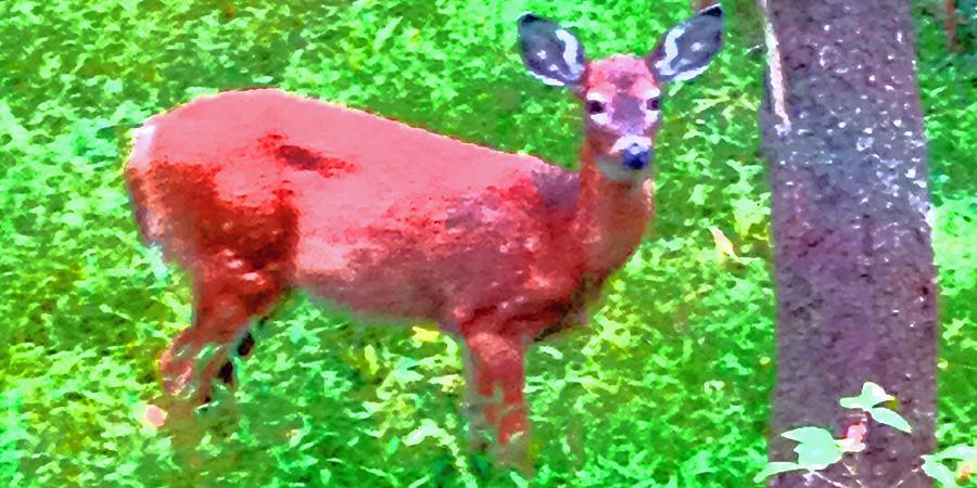Listen Photograph - Listening Deer by Dawn Richerson