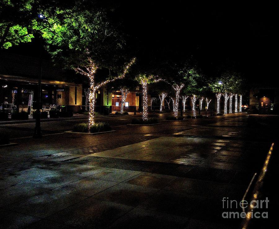 Lit trees by JB Thomas