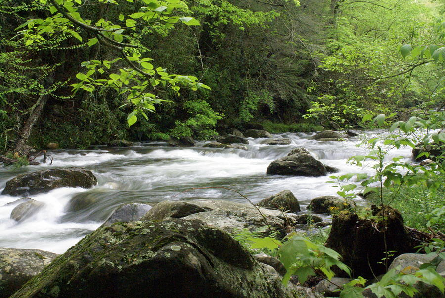 River Photograph - Litltle River 1 by Marty Koch