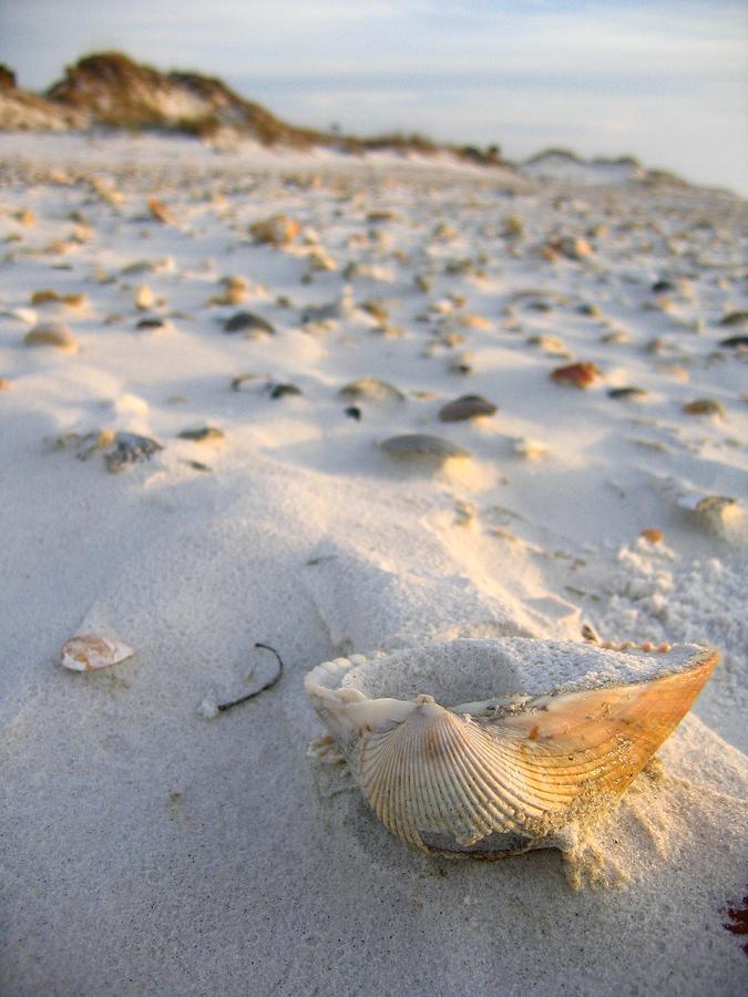 Cape San Blas Photograph - Littered Shells by Arthurpete Ellison