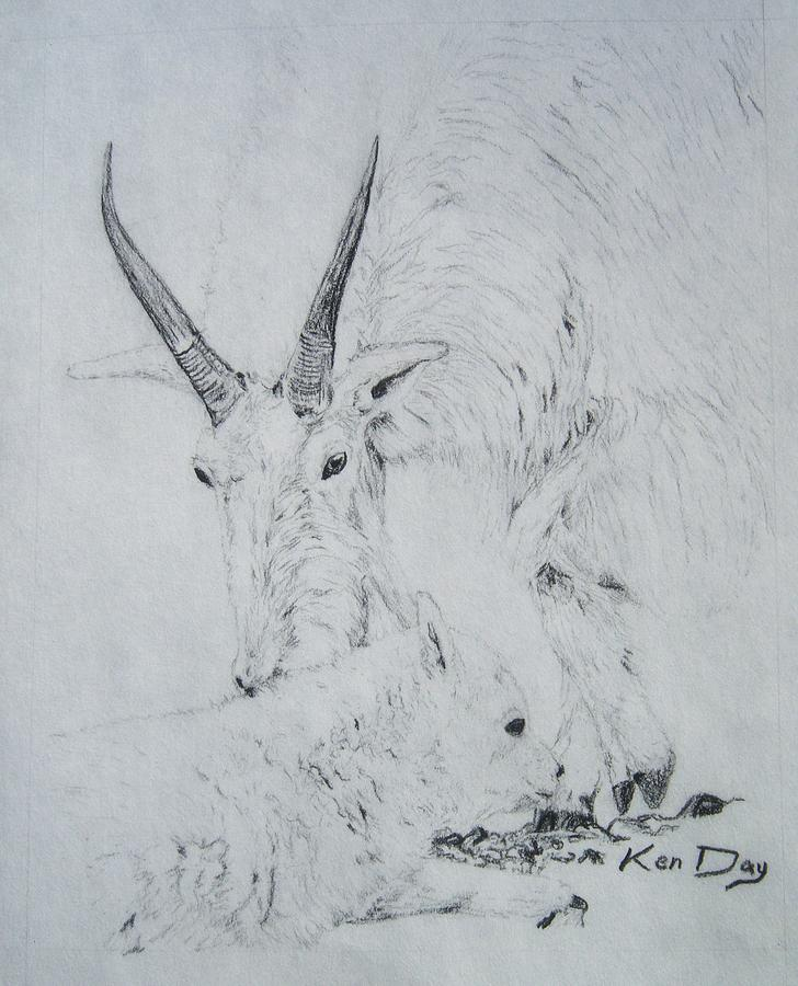 Goat Drawing - Little Billy by Ken Day