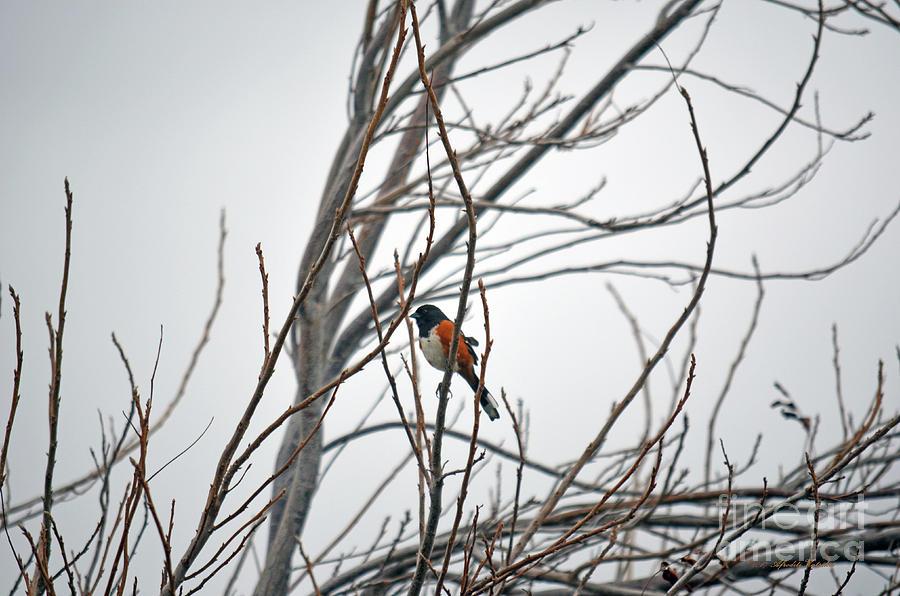 Little Bird by Afroditi Katsikis