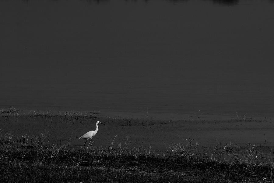 Little Egret Photograph - Little Bird by Deepak Pawar