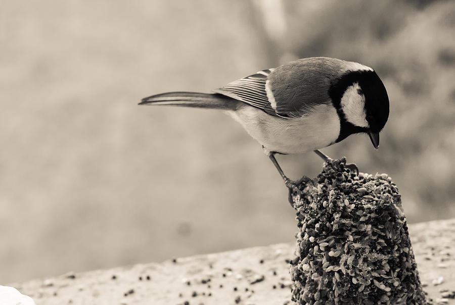 Bird Photograph - Little Bird Feeding by Georgia Fowler