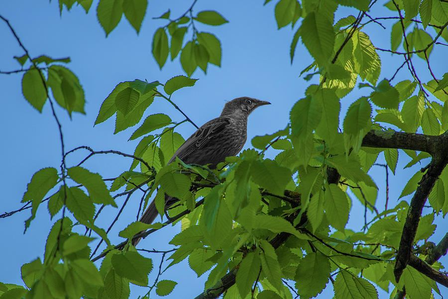 Little Bird In The Tree Photograph