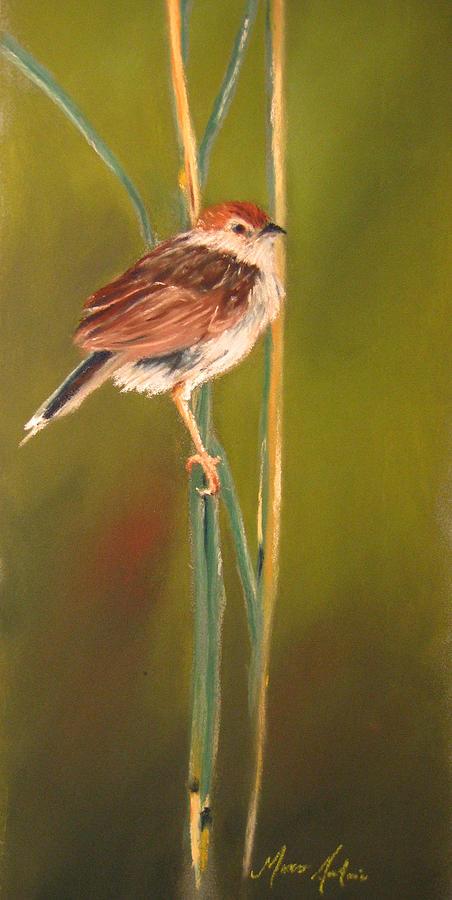 Bird Painting - Little Bird  by Marco  Antonio