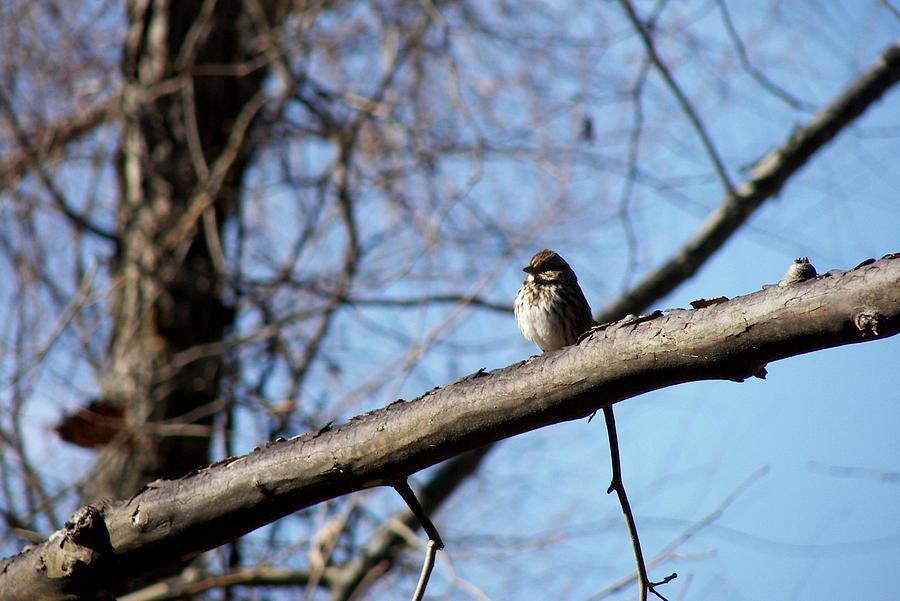 Bird Photograph - Little Birdie by JAMART Photography