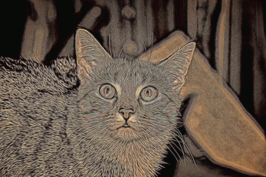 Cat Photograph - Little Bit by David Yocum