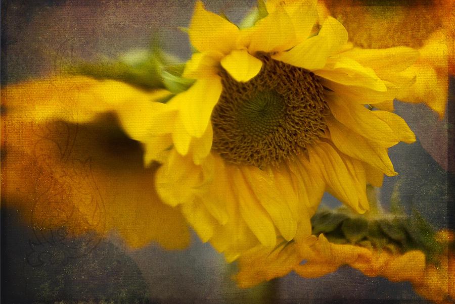 Little Bit of Sunshine by Beverly Stapleton