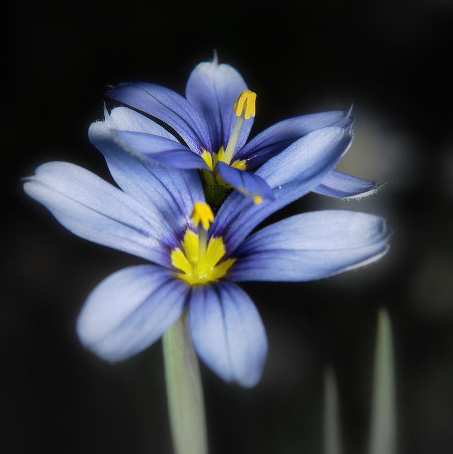 Little Blue Flowers by Karen Musick