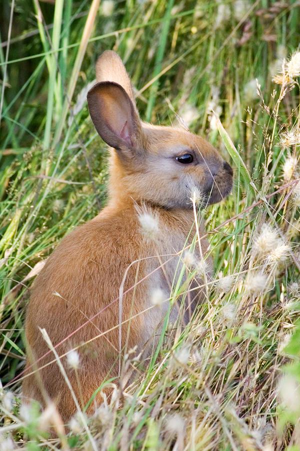 Little Bunny Photograph