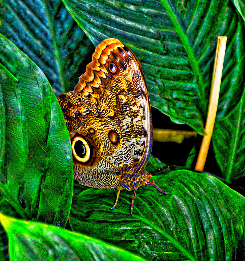 Photo Stream Photograph - Little Butterfly by Collette Rogers