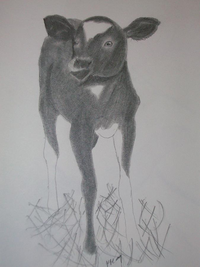 Cow Drawing - Little Calf by Kristen Hurley