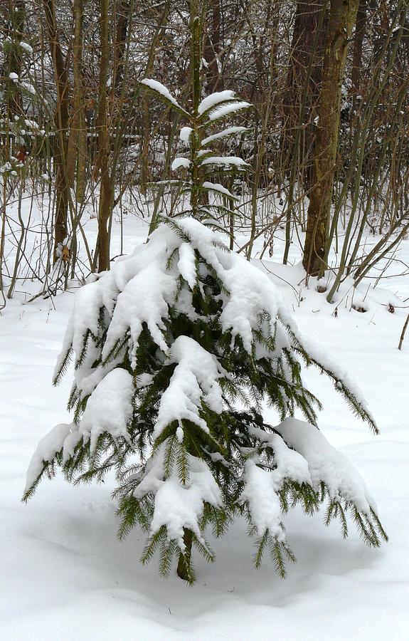 Christmas Photograph - Little Christmas Tree by Valerie Ornstein