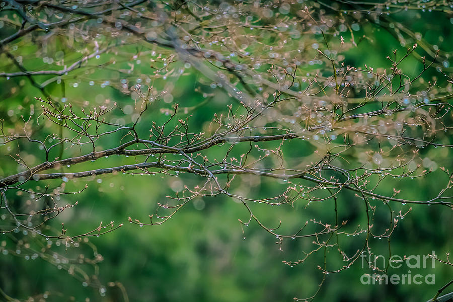 Drop Photograph - Little Diamonds In My Trees by Claudia M Photography