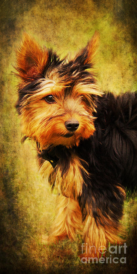 Puppy Photograph - Little Dog II by Angela Doelling AD DESIGN Photo and PhotoArt