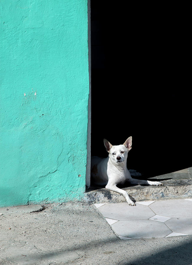 Little Dog in Doorway Havana Cuba by Charles Harden