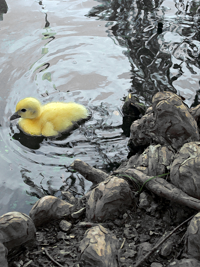 Duck Photograph - Little Ducky 2 by Angelina Vick